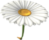MKT Icon DaisyGlider.png