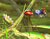 Pikmin items Brawl.png