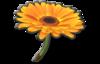 FlowerGliderMK8.png